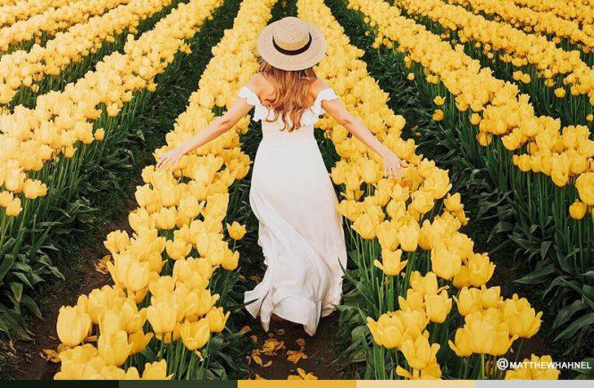 Flower Fields Color Palette