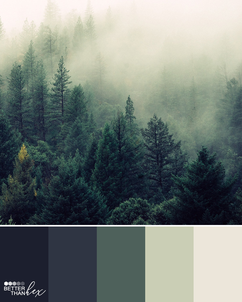 Foggy Forest – Better Than Hex – Color Palette Inspiration