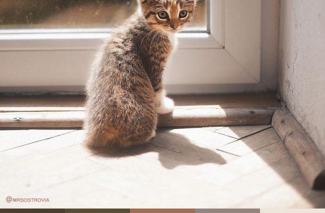 Kitten Color Palette
