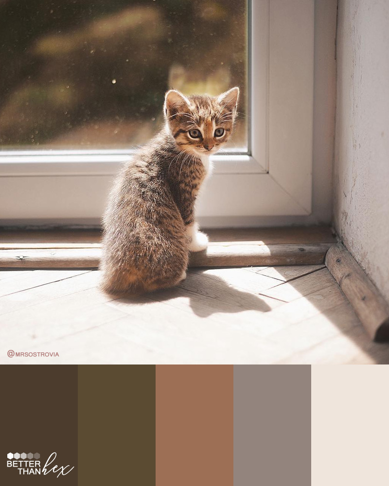 Kitten Color Palette