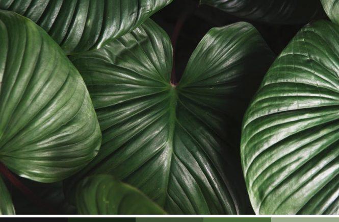 Leaf Color Palette