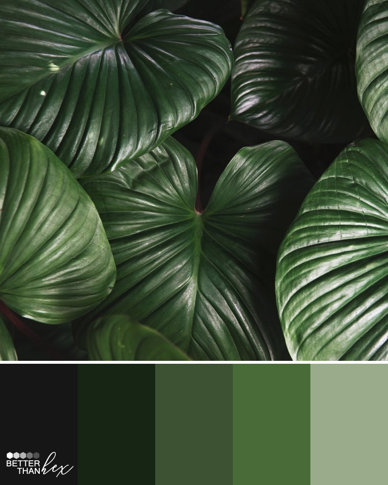Leafy Greens – Better Than Hex – Color Palette Inspiration