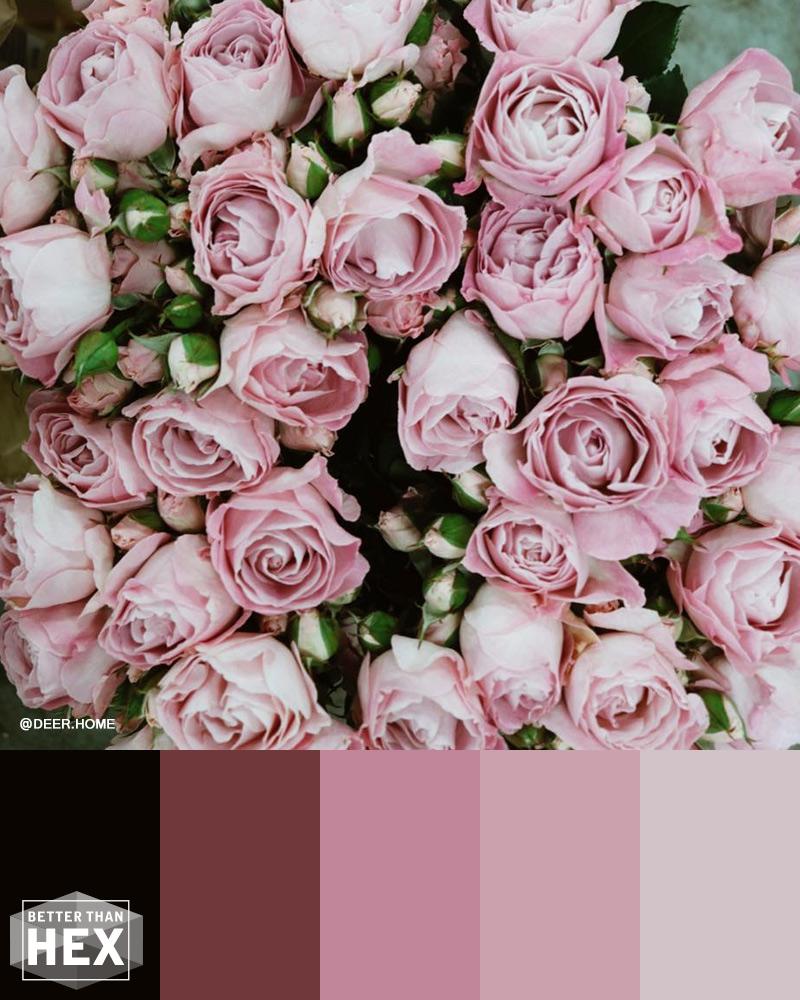 Rose Color Inspiration